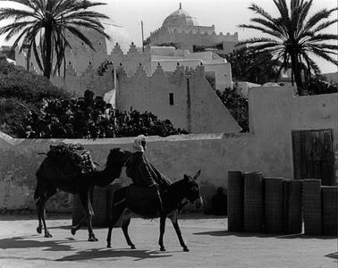 Man On Donkey Leading Camel, Safi, Morocco, North Africa