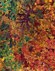 Tundra Fall Color