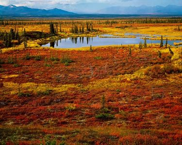 Fall Tundra Near Brushkana Creek, Denali Highway, Alaska