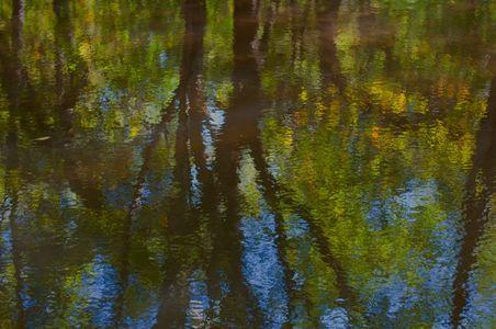 Alders Reflected II, Andrew Molera State Park, Big Sur Coast, Californa, 2009 by David Leland Hyde.