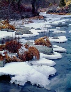Ice Plates on Indian Creek, Winter, Northern Sierra Nevada, California