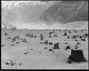 Field Of Stumps, Hetch Hetchy Lake At Low Water, Yosemite National Park, Sierra Nevada, California