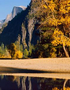 Cottonwoods, Merced River, Half Dome, Fall, Yosemite Valley, Yosemite National Park, Sierra Nevada, California (Vertical)