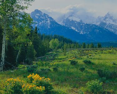 Spring Meadow, Tetons, Grand Tetons National Park, Wyoming