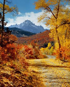 Mt. Sneffels, Road Near Dallas Divide, Colorado