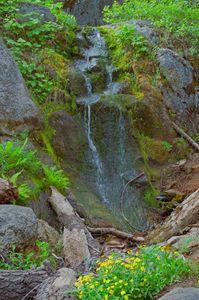 Natural Garden, Kaweah River Canyon, Sequoia National Park, California, 2009 by David Leland Hyde.