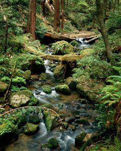 Waddell Creek, Big Basin Redwoods State Park, Santa Cruz Mountains, California