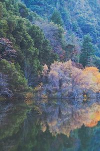 Fall Color, North Fork Feather River, Feather River Canyon, Northern Sierra Nevada, California, copyright 2011 David Leland Hyde.