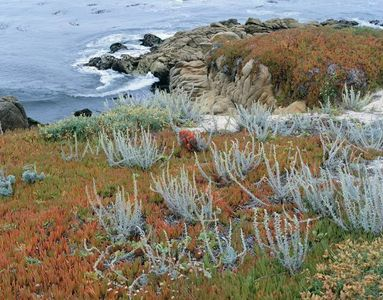 Shore Of Pacific Ocean Near Carmel, Central Coast, California
