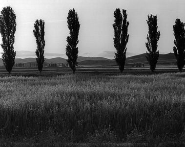 Poplar Trees, Field And Hills Of The Middle Atlas, Morocco
