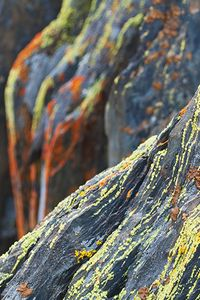 Lichen On Slate Rocks Near Mariposa, Sierra Foothills, California, copyright 2009 David Leland Hyde.
