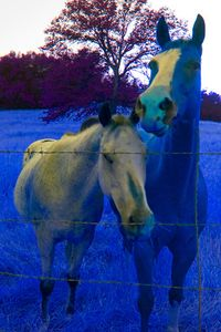 "Two Horses With Live Oak, ""Inveration,"" Sierra Foothills Near Dunlap, California, David Leland Hyde, 2009."