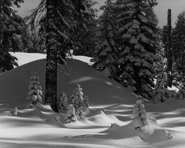 Winter Forest Near Badger Pass, Yosemite National Park, Sierra Nevada, California.