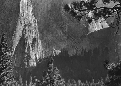 Cathedral Rocks, Pine Branches, Yosemite Valley, Yosemite National Park, Sierra Nevada, California.