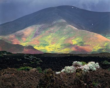 Lava, Flowers, Craters Of The Moon National Monument, Idaho