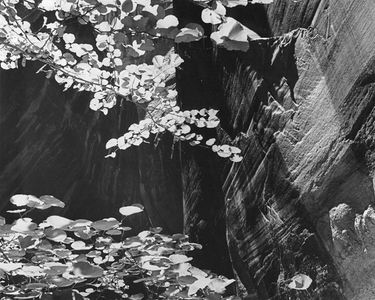 Redbud Leaves, Music Temple, Glen Canyon Of The Colorado River, Utah, 1962