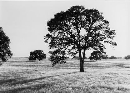 Oak Savanna, Sacramento Valley, Great Central Valley, Near Ione, California