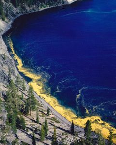 Pollen, Shore of Crater Lake, Crater Lake National Park, Oregon