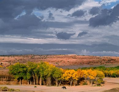 Horse And Cottonwoods At Mouth Of Canyon De Chelly National Monument, Arizona