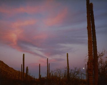 Moonrise, Cordon Cactus, Road To San Francisquito, Baja California, Mexico