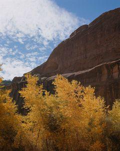 Cottonwoods, Canyon Del Muerto