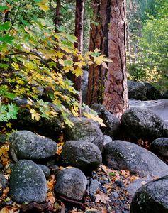 Ponderosa Pines, Volcanic Boulders