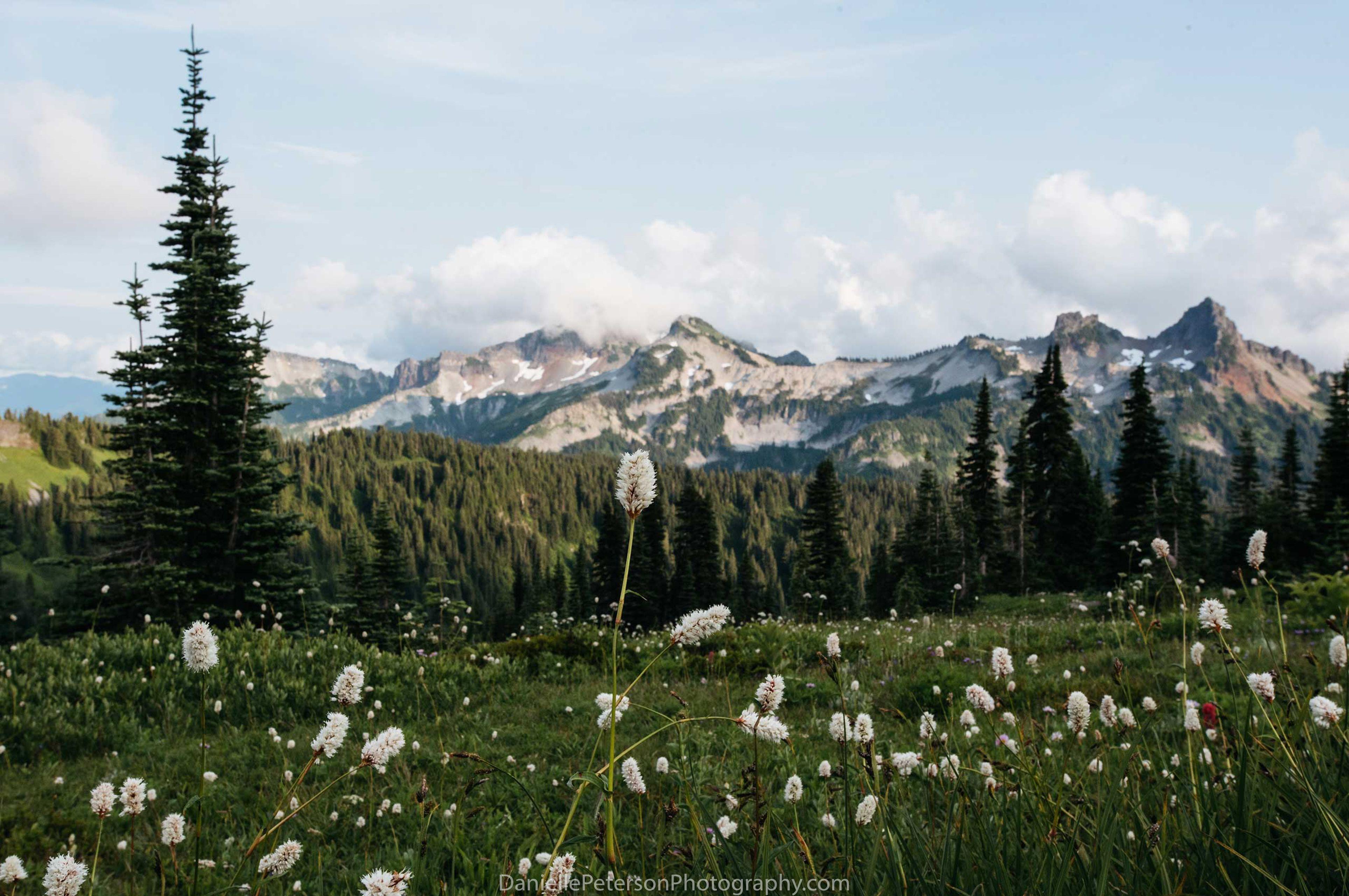 Rainier-.jpg