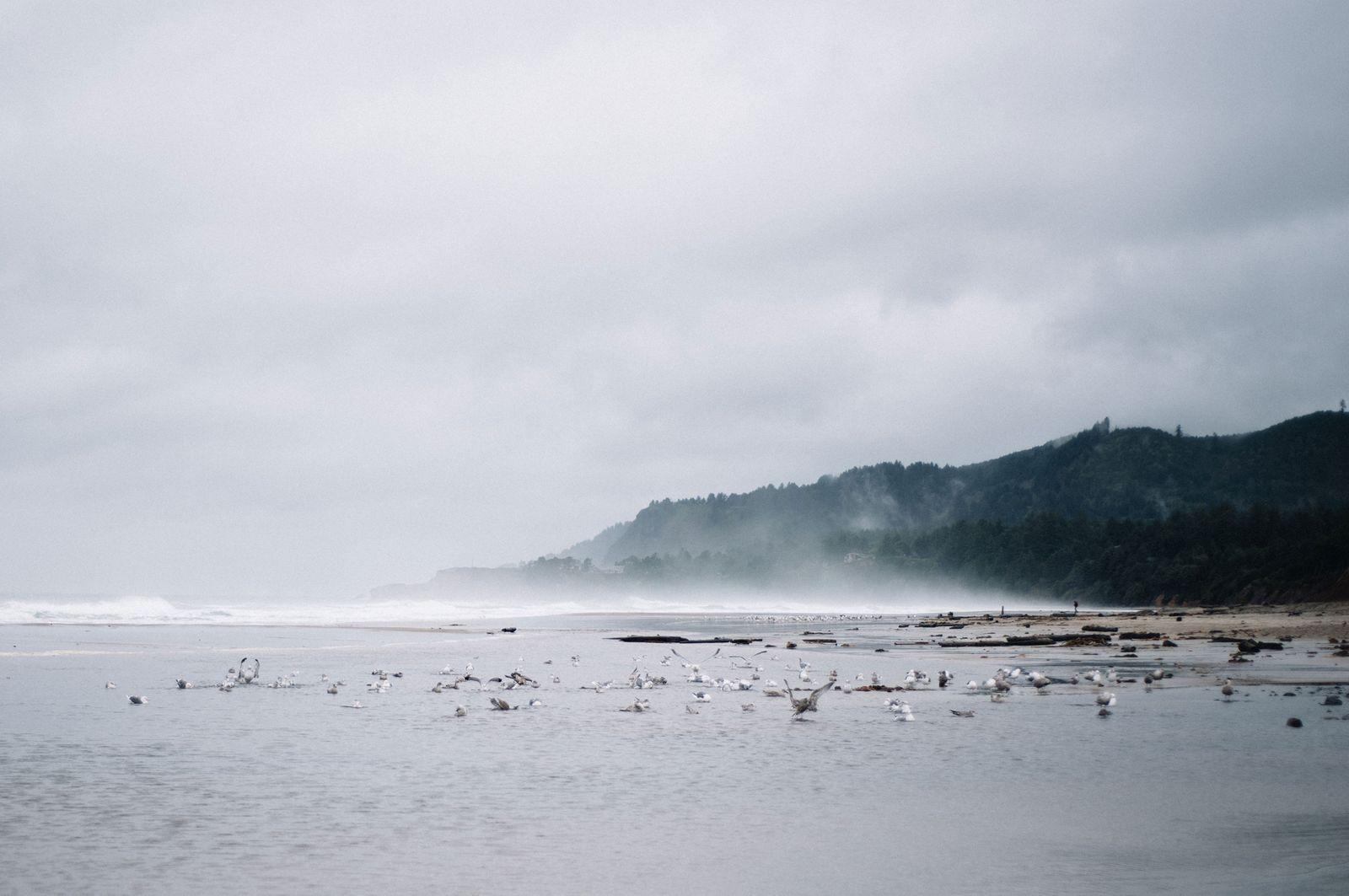 web-coast.jpg