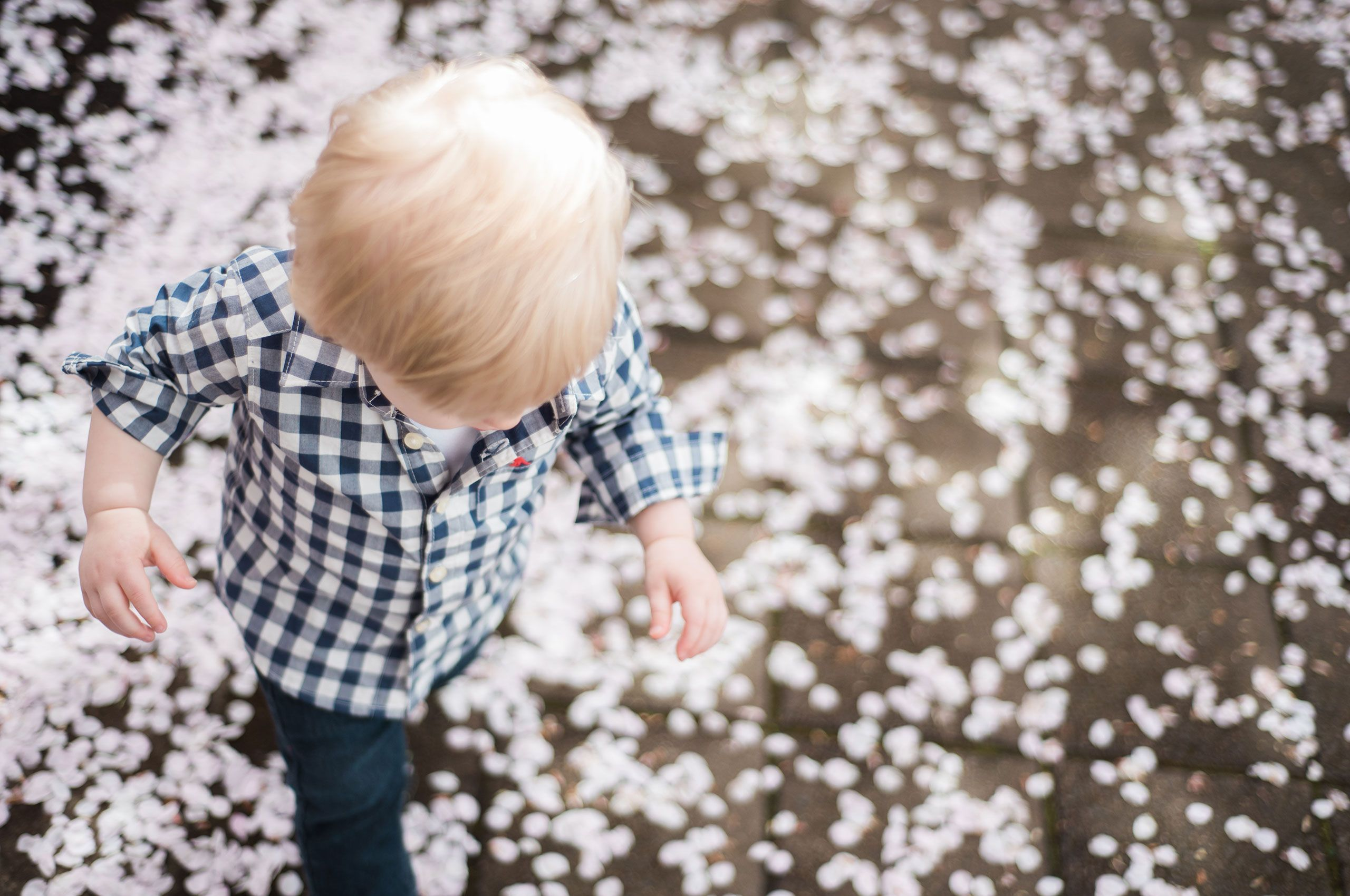 Blossoms3.jpg