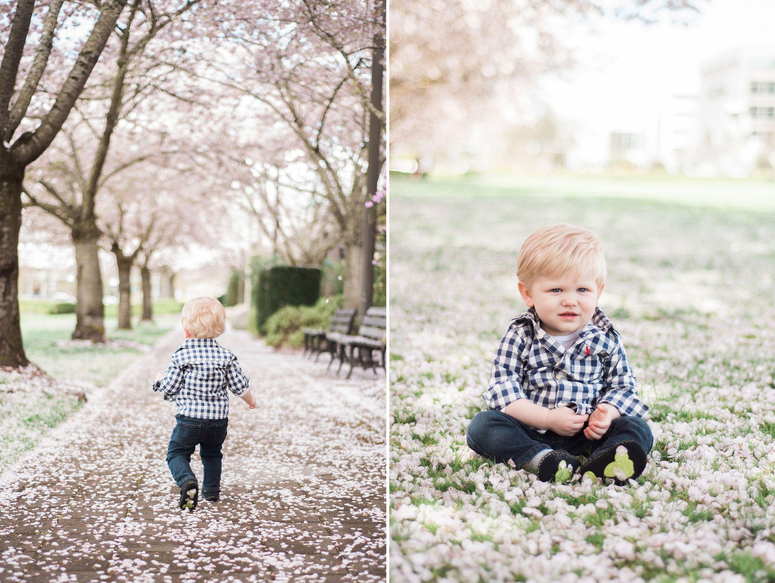 CherryBlossoms4.jpg