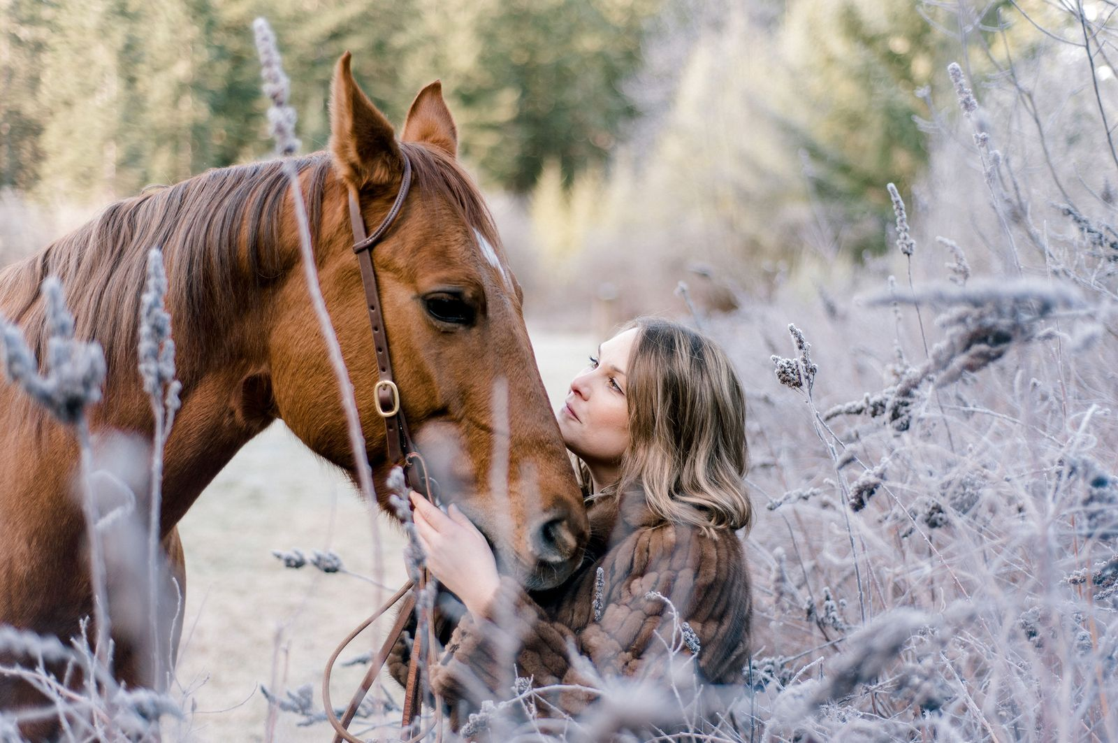 web-horse-4130-2.jpg