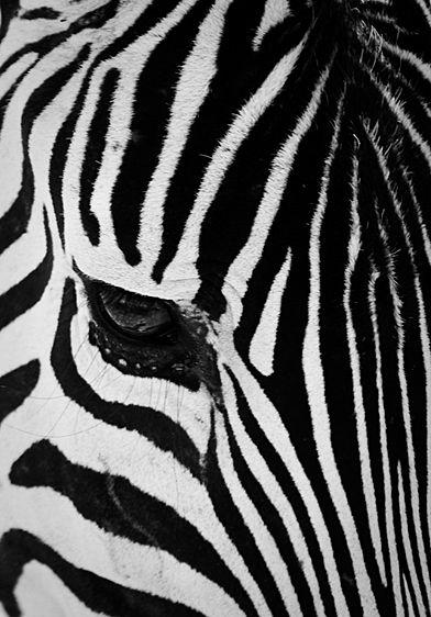 20090622_Africa0201.jpg