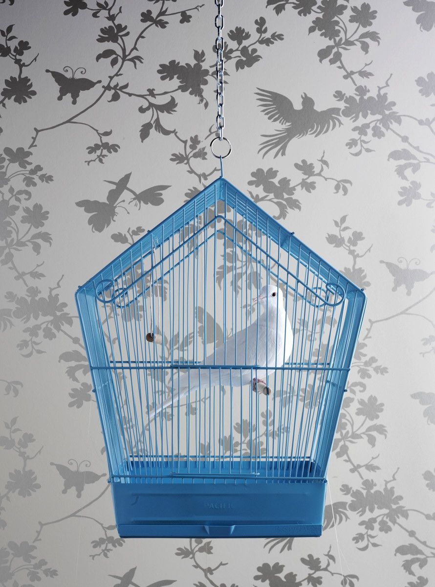 1bird_in_cage.jpg