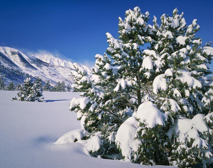 ES-1889_Londie_G_PadelskyWinter,  Pinyon Pines and Sierra Mountains, California
