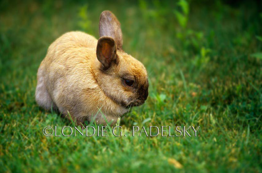 ES35-3194_Londie_G_PadelskyBunny Rabbit