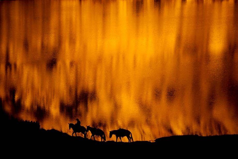 YSMT-1660_Londie_G_PadelskyCowboy leading pack mules, Yosemite Wilderness, California