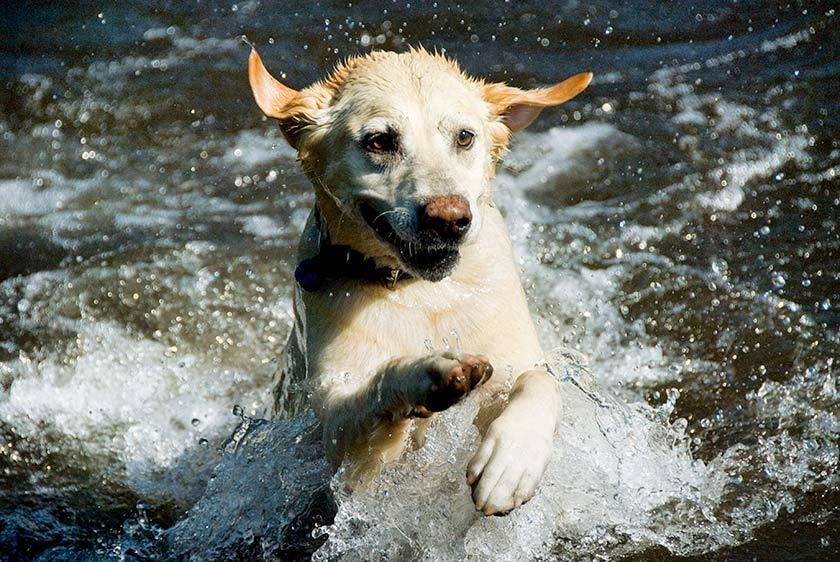 Dog_QLP2068_LondieGPadelsky