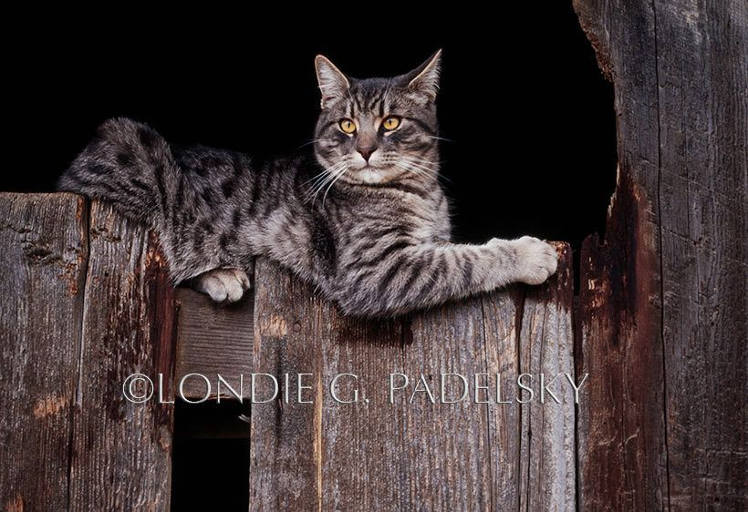 Cat_314_LondieGPadelsky
