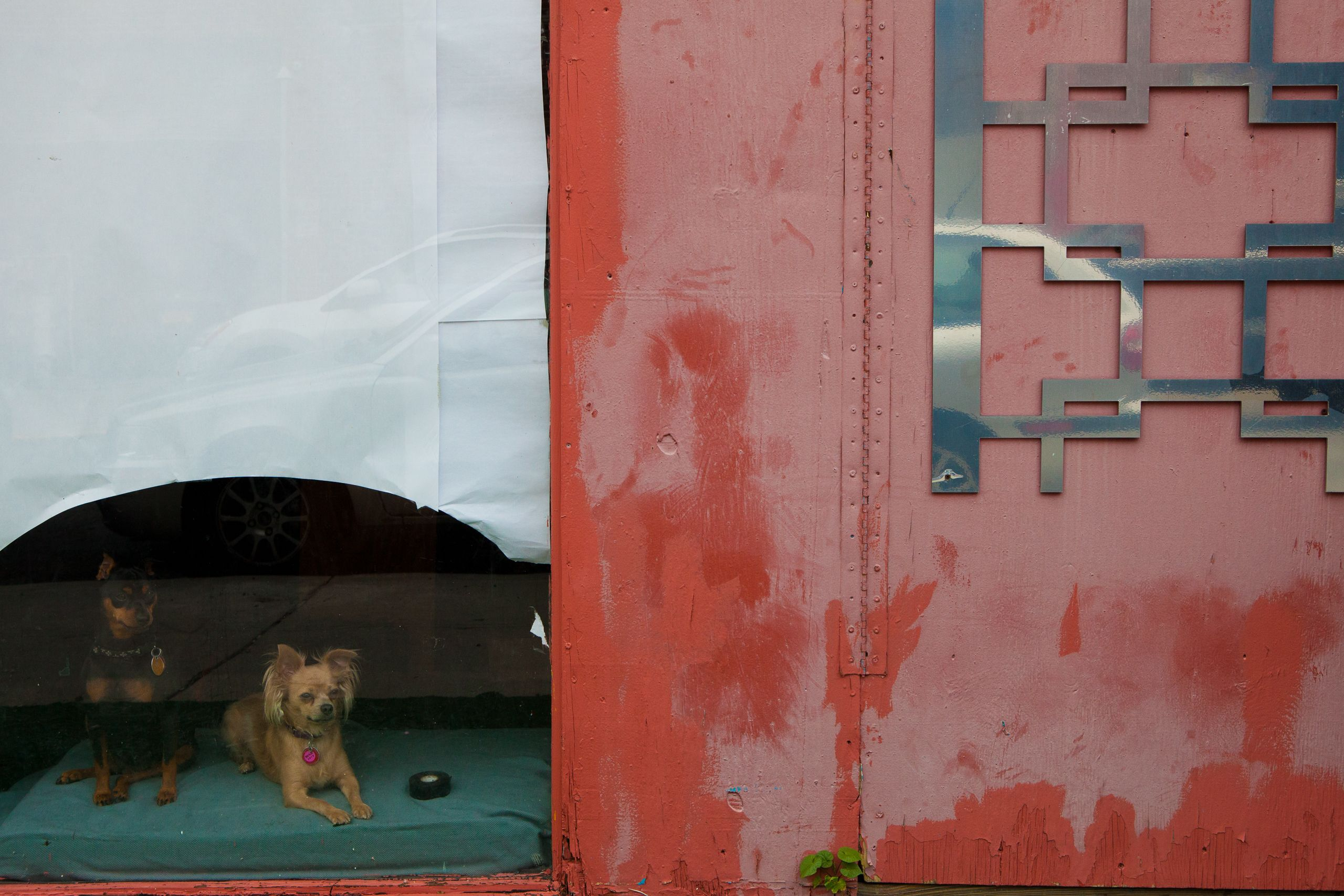Dogs, Williamsburg, Brooklyn