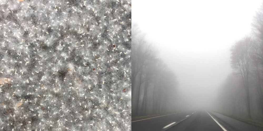 fluff & fog.jpg