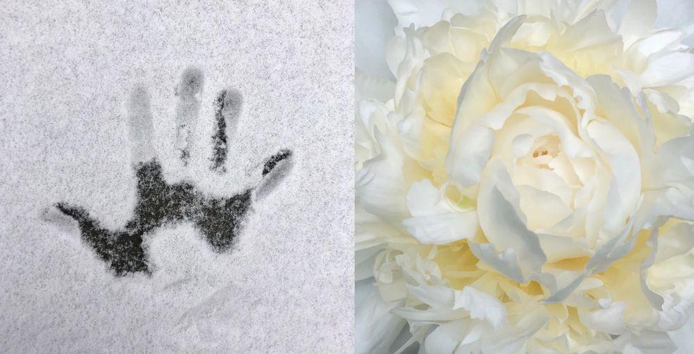 snow hand & peony.jpg