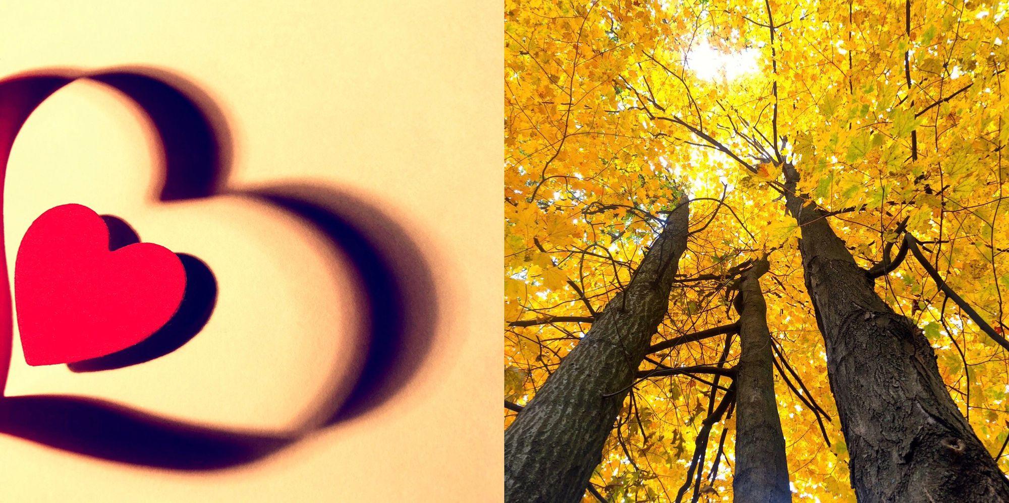 heart and yellow trees.jpg