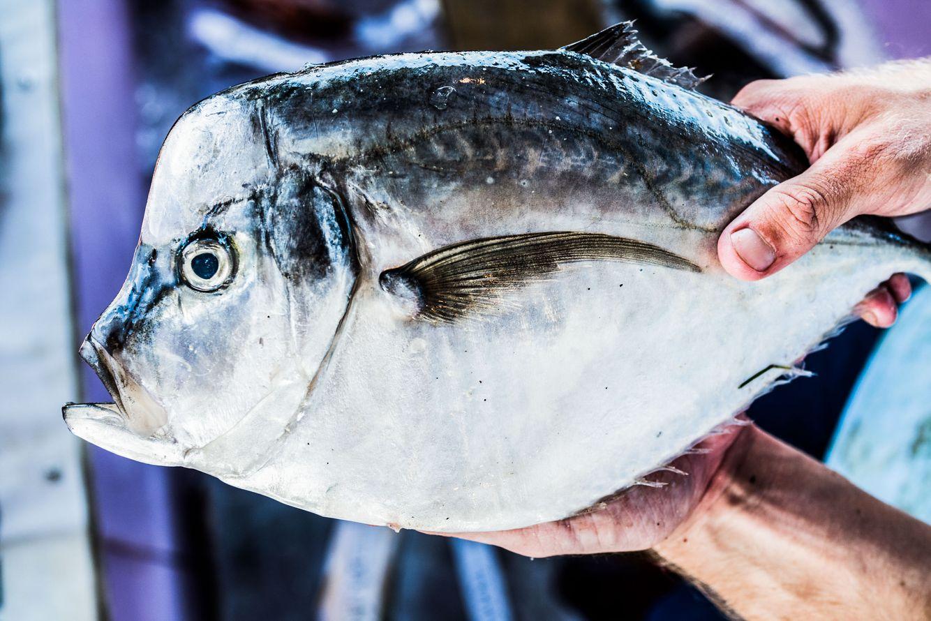 Fishing_33.jpg
