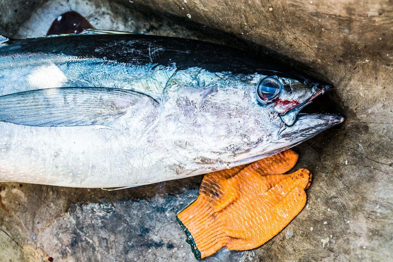 Fishing_16.jpg
