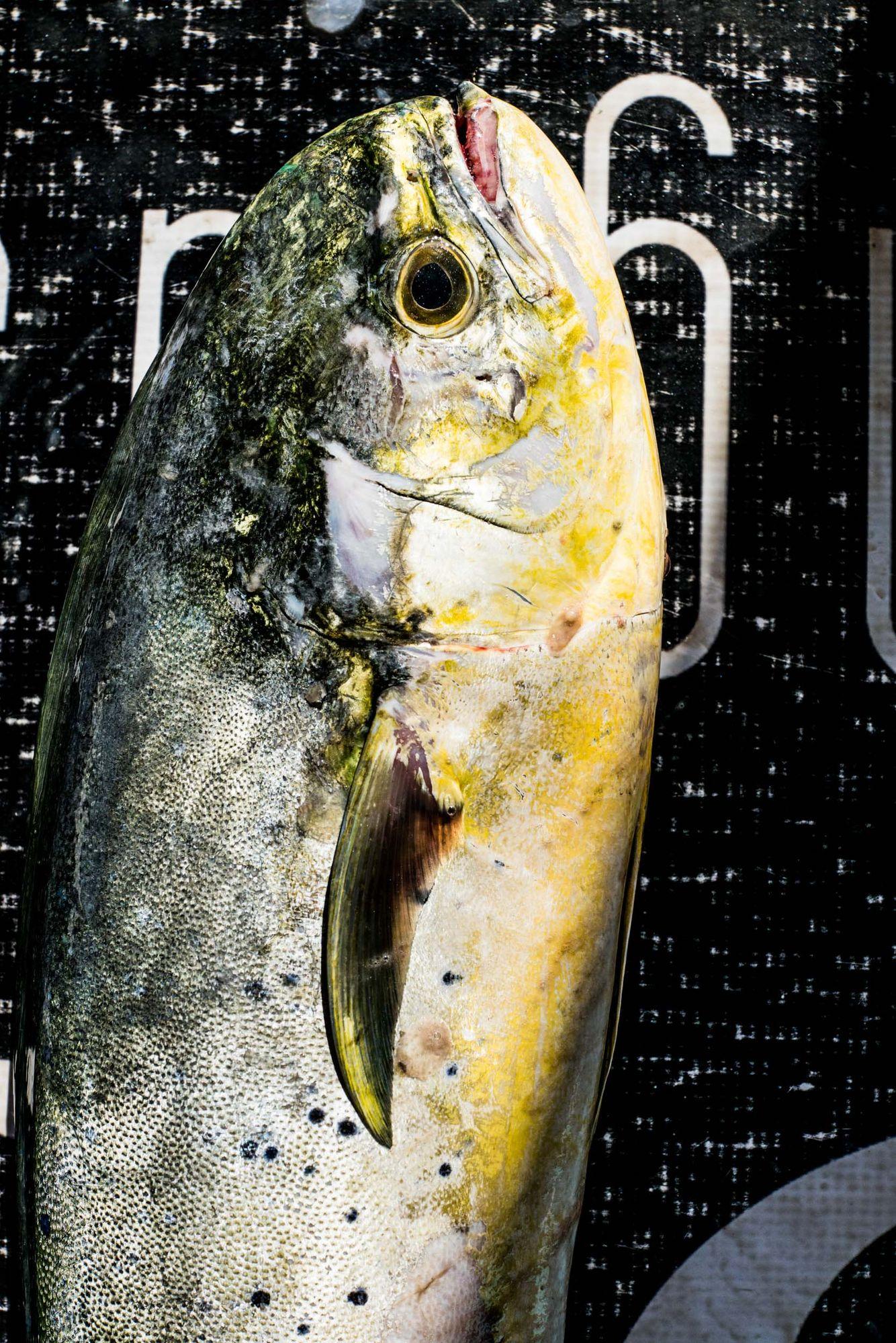Fishing_23.jpg