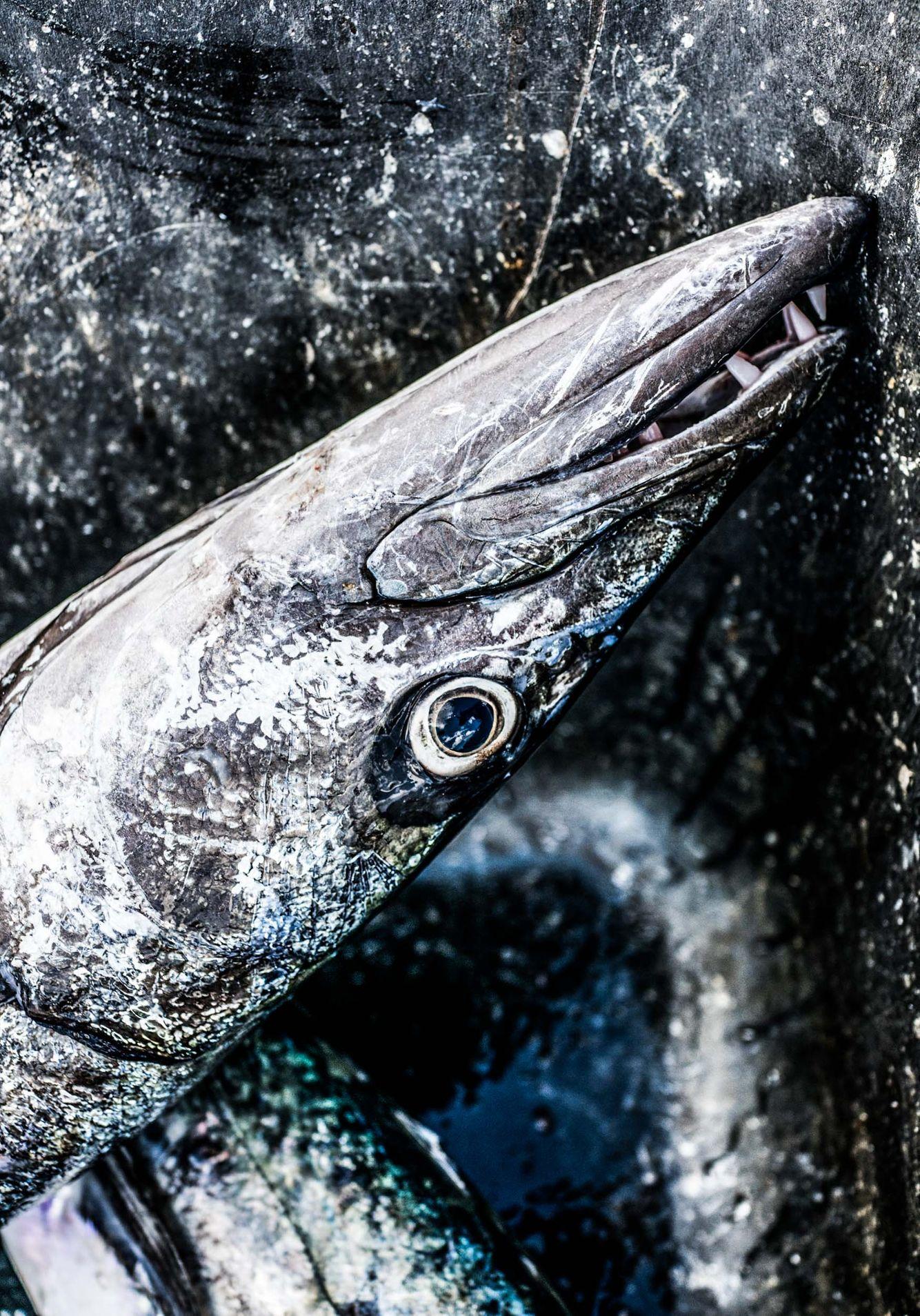 Fishing_24.jpg