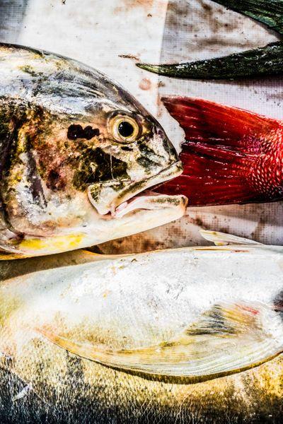 Fishing_17.jpg