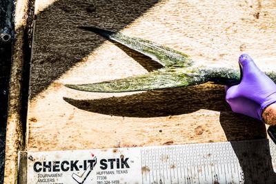 Fishing_27.jpg