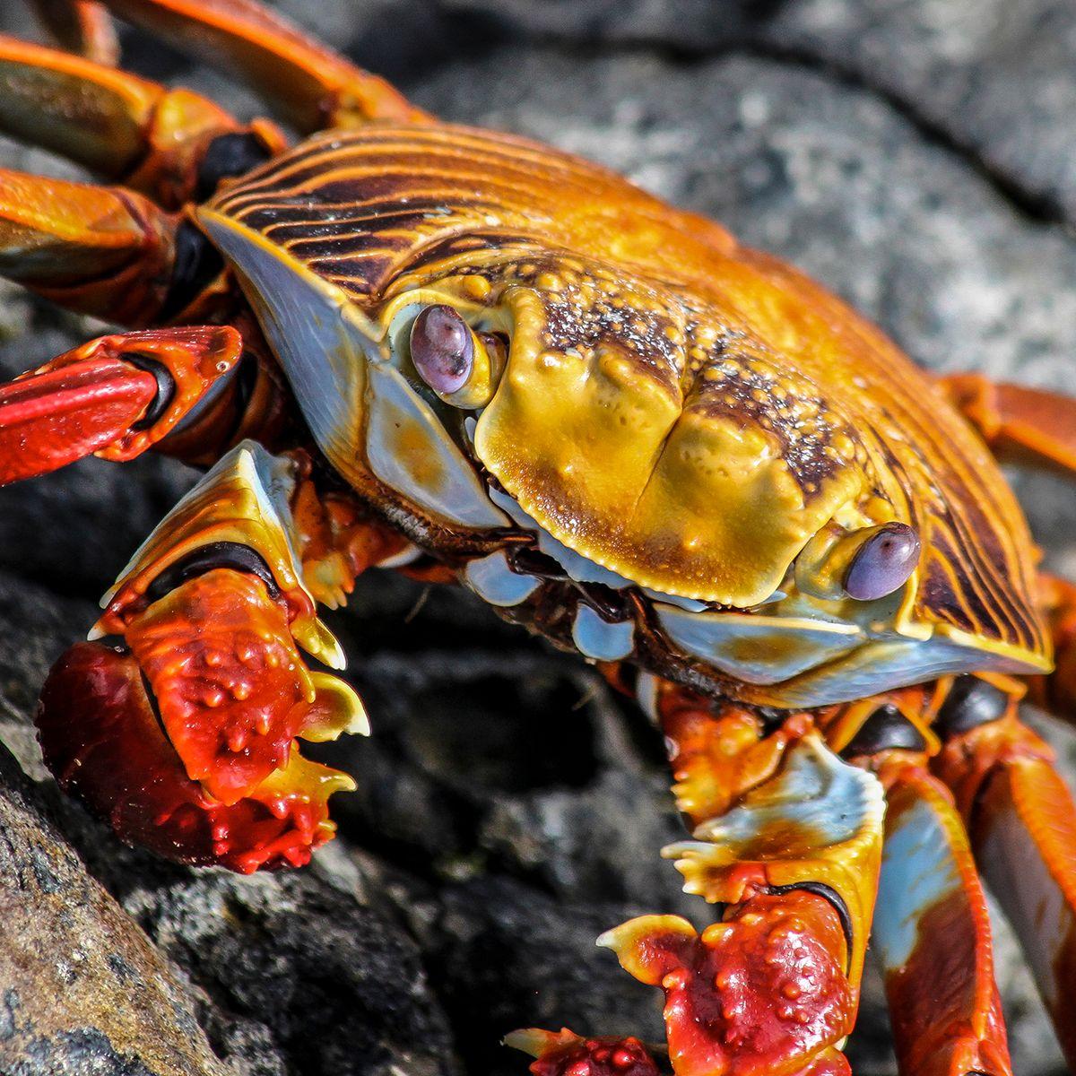 crab_02-2.jpg