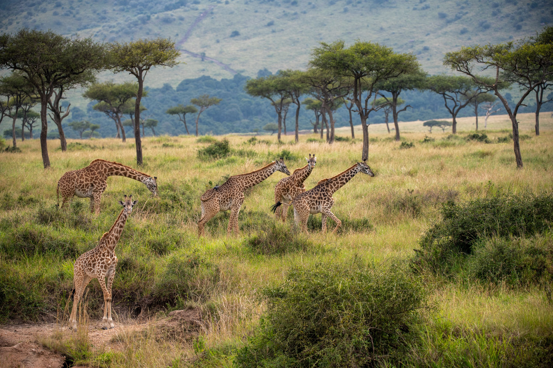 AFRICA 2019-10.jpg